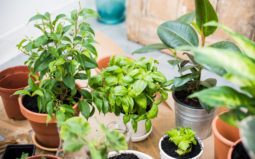 Using Plants to Cut Your Energy Consumption